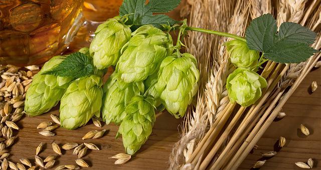 Hoa bia và mạch nha là hai nguồn nguyên liệu chính (ngoài nước) để làm nên một sản phẩm tuyệt vời